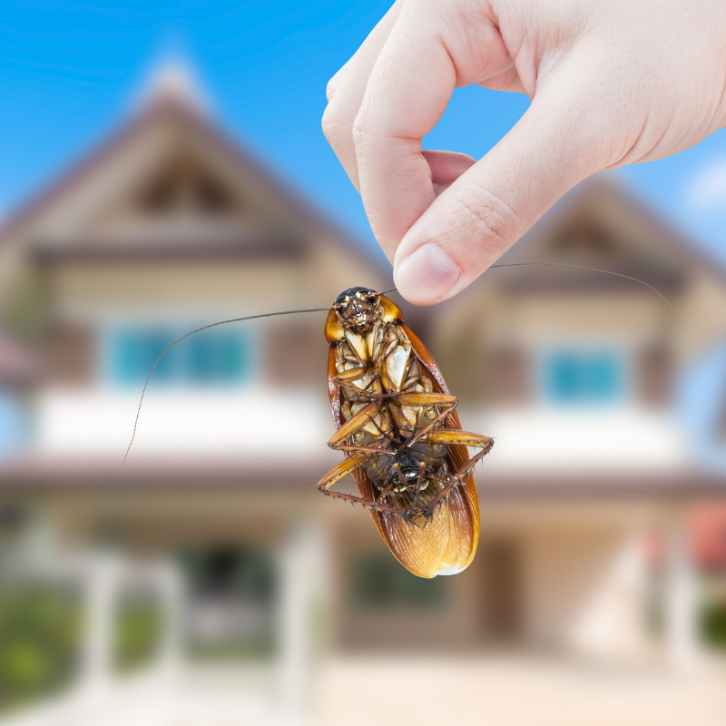 4 Fall Pests That Want To Get Into Your Home This Winter