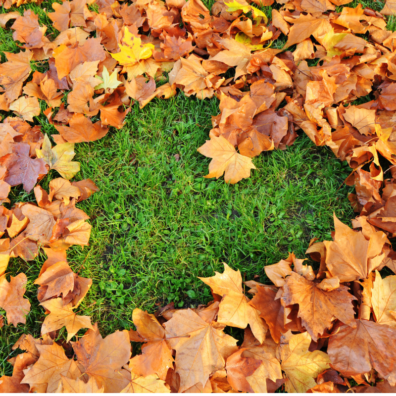 Fall Lawn Care: Top 3 Lawn Care Essentials For Fall