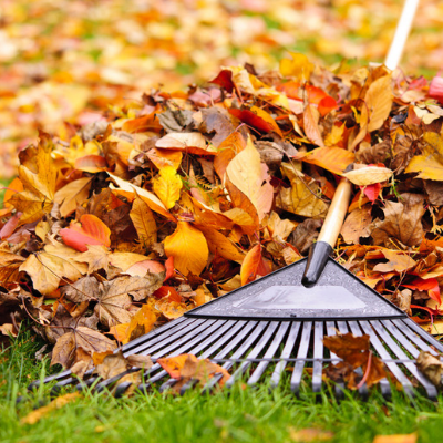 fall lawn care raking