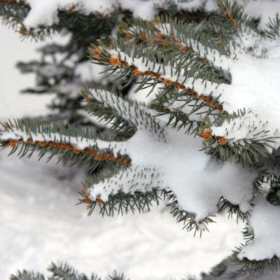 snow natural fertilizer